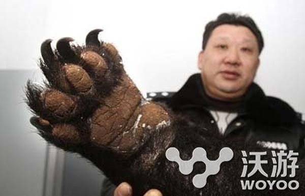 男子朋友圈叫卖熊掌只售980 买卖熊掌皆违法