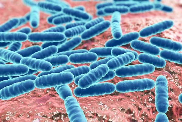婴儿拉肚子吃双歧杆菌可以吗