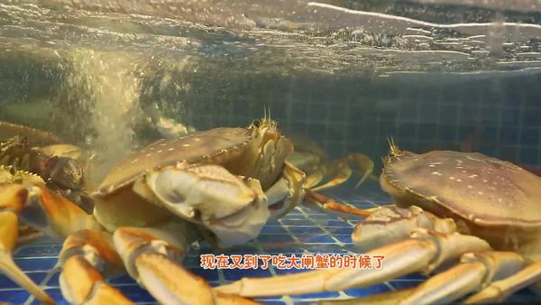 大闸蟹可以水煮吗,死了的大闸蟹可以吃吗