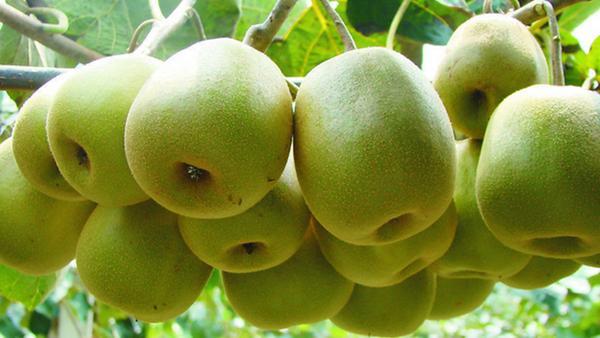 心肌梗塞吃什么水果好 这5种食物不容错过
