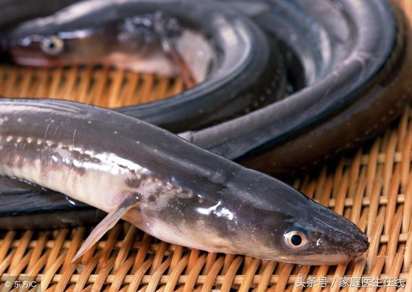 鳗鲡鱼煎的功效与作用