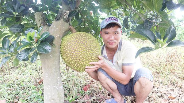 菠萝蜜太熟了能吃吗,菠萝蜜太熟了会怎么样
