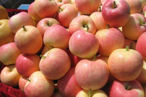 平时多吃些什么水果可以清肺