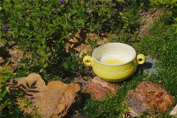 理气渗湿汤的功效与作用