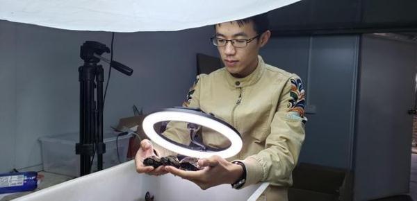 大龟丸的功效与作用
