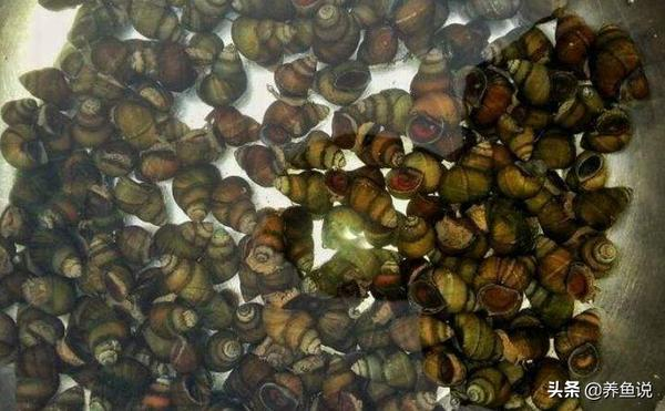 菊藻丸的功效与作用