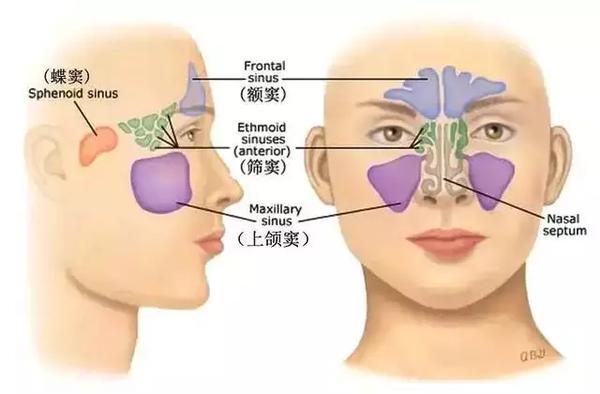 治疗鼻炎看中医好还是西医好?