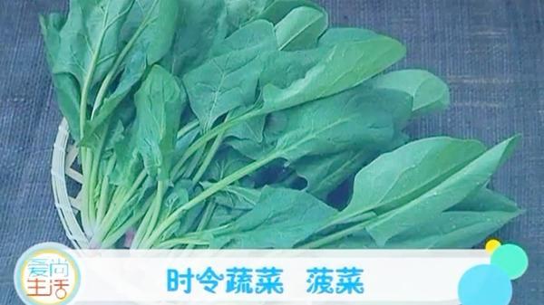 菠菜根有什么作用与功效,菠菜根有什么禁忌