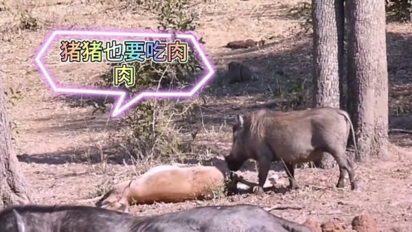 烟雨江湖救治大牛后续 大牛不用死了