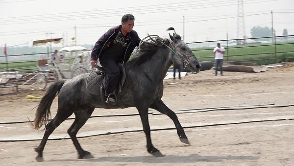 寻找满意的坐骑 我的世界快速识别好马攻略