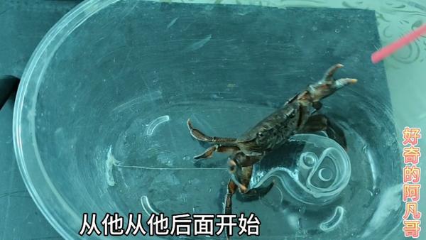 冰冻的大闸蟹还能吃吗,冻螃蟹怎么解冻