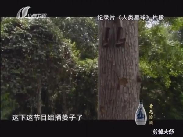 舌尖2再次抄袭BBC 导演胡博称已获授权