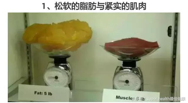 五斤肉和五斤脂肪图片