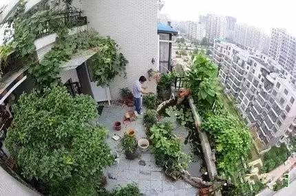 屋頂菜園實景圖片欣賞