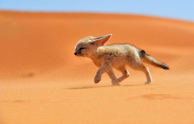 九尾狐頭像男