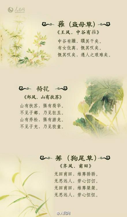诗经中的植物及图片