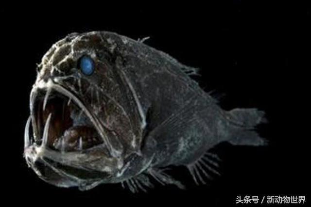 麻辣变形计:魔鱼不仅颜值高,身手也厉害,简直是完美