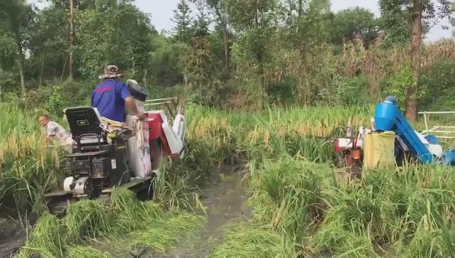 全新履带式收割机,再歪倒的水稻都能收割,5万块钱就能买!