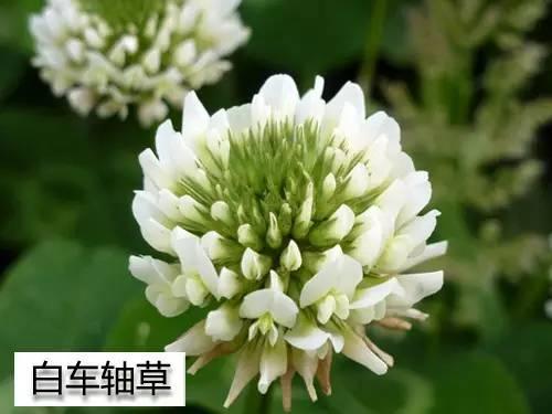 农村常见的植物300种