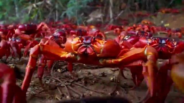 梦见红螃蟹,梦见红螃蟹是什么意思,周公解梦梦... _本命佛算命网