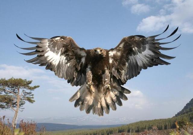 哈斯特巨鹰图片