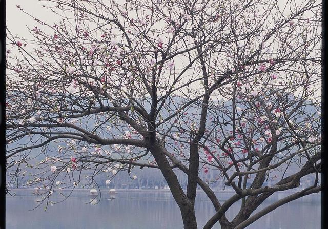 世界图集 杭州西湖如此美丽的风景你来过么