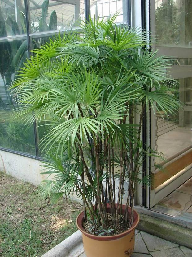 十大净化空气的室内植物排名 - 图片资讯 - 黔农网