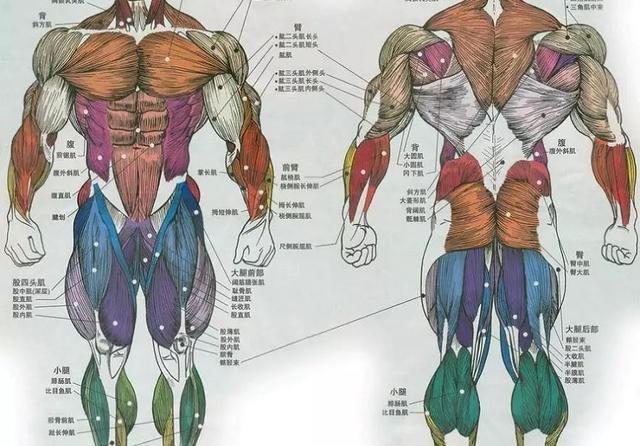 健身房器械科普篇,80余款器械,你都知道吗?