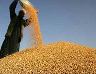节约粮食主题图片