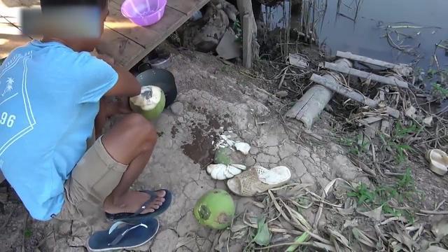 椰子种植方法