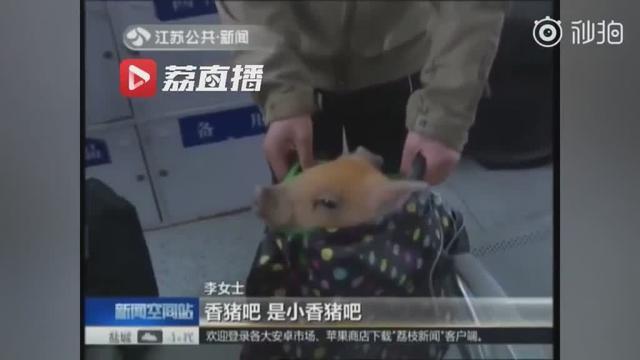 稀奇啊,第一次见猪也坐火车了,名副其实的贵宾啊