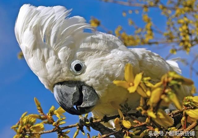 最全的鹦鹉照片集锦 真是美翻了!