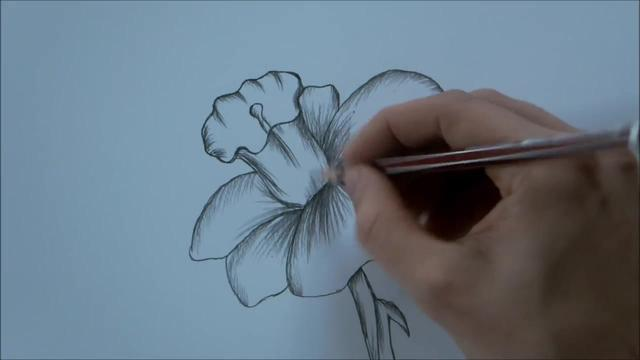 简单铅笔画图片大全-盛开的玫瑰花 - 5068儿童网