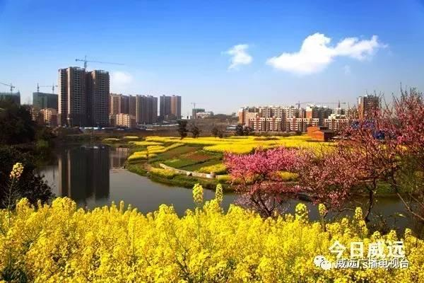 威远县东联镇书记张琳
