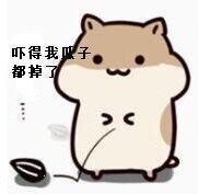 小倉鼠掉瓜子表情包