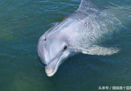 中国国宝是啥动物