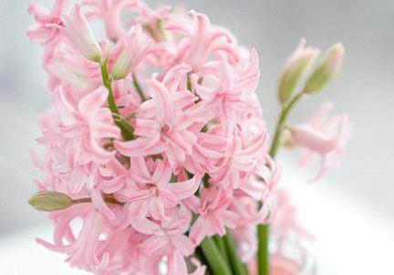 最全花语大全——各种花的花语