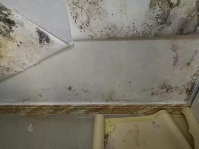 雨季来临,墙纸、墙布发生霉变该如何处理、如何预防?