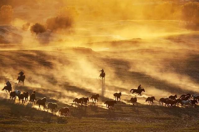 草原奔馳的駿馬圖片