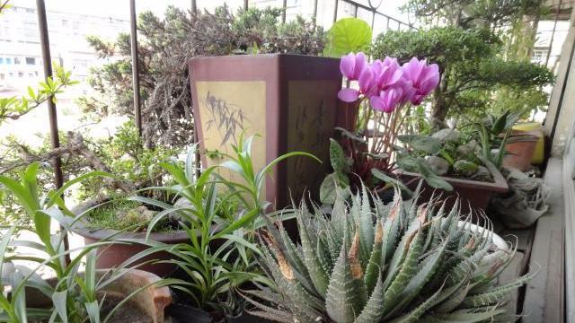 【美丽花卉】50种常见室内盆栽绿化植物介绍_360个人图书馆