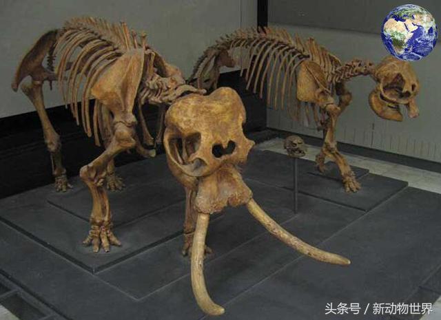 远古时期有一种身高很矮的大象,才90公分,为何会这么矮呢?