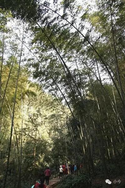 云崖牧歌蜀南竹海图片