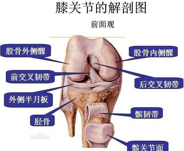 髋关节滑膜炎症状图片
