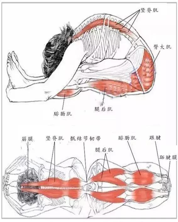 身体常见肌肉名称及其作用和锻炼方法(一)! - KG运动 - 简书