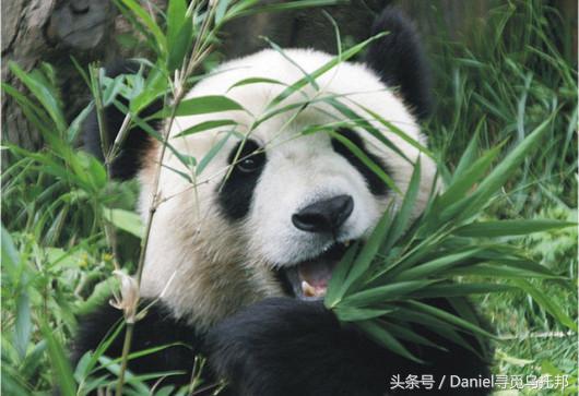 中国现在十大国宝动物