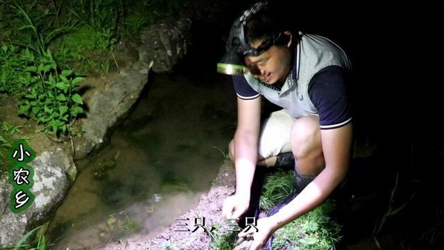 小农乡:插完秧下田抓龙虾,一抓一个准,一个都跑不掉,过瘾啊!