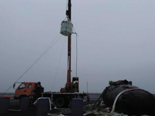 海底小纵队:小抹香鲸把皮医生当成虎鲸