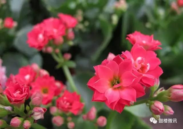 各类花的花语大全