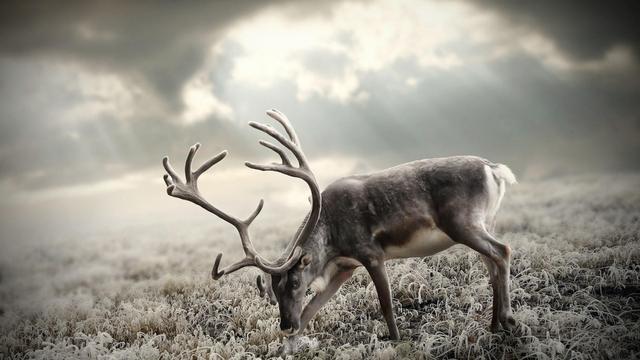 麋鹿梦幻图片唯美