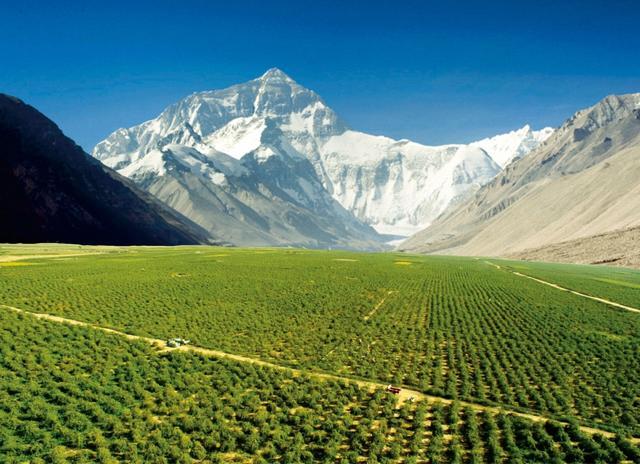 海拔四千米高原上的魅力红海——记西藏白朗县万亩有机枸杞生态观光产业园